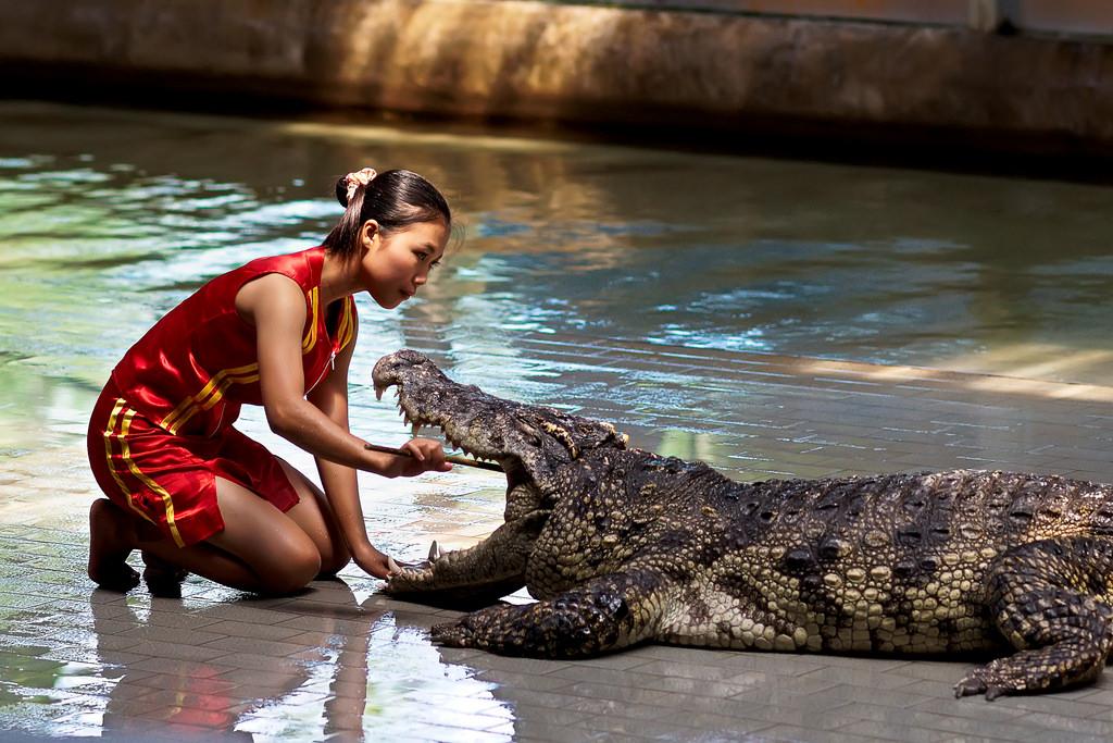 krokodilovaya-ferma-v-pattaye