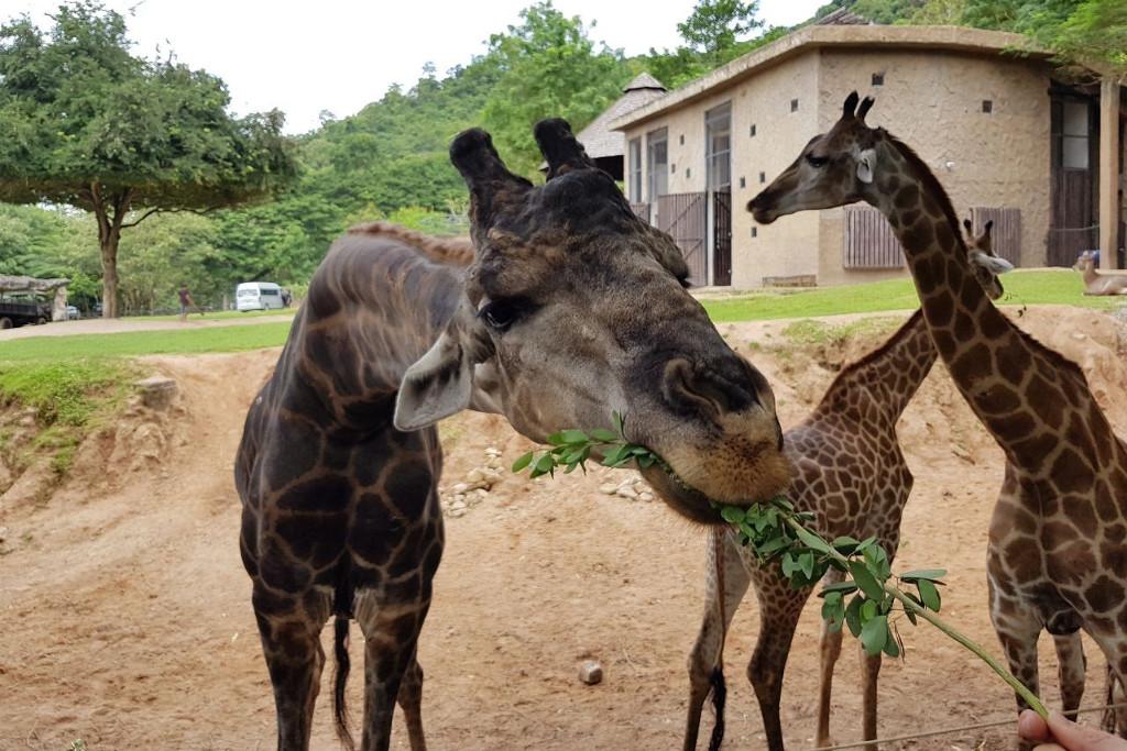 Зоопарк Кхао Кхео