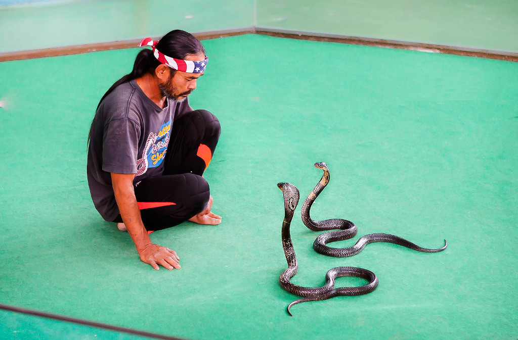 Змеиная ферма и шоу змей в Паттайе