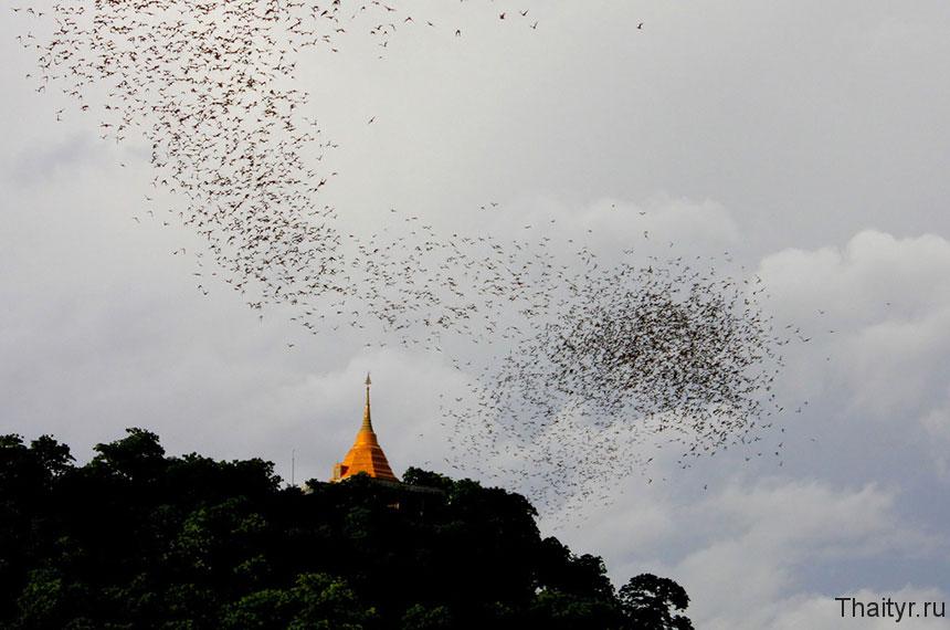 Гора летучих мышей в окрестностях Хуа Хина